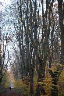 Herbst2014-27