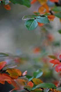 Herbst2014-42