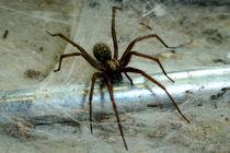 Spinne von Philipp Meier