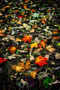 Colourleaves-hdr