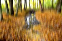 Im Herbstwald von derwaldrapp
