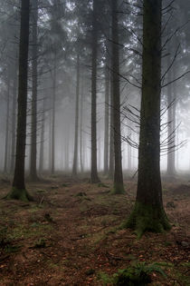 Misty Spruce Woods von David Tinsley