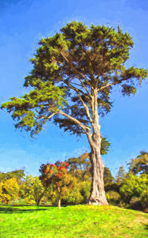 Cypress Tree In Golden State Park by John Bailey