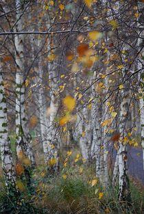 Herbst2014-104