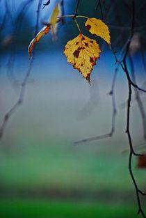 Herbst2014-117
