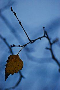 Herbst2014-119