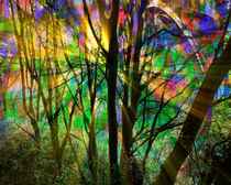 Magic of a Forest by Edmund Nagele F.R.P.S.