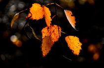 Herbstleuchten by derwaldrapp