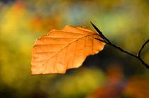 Herbstblatt von derwaldrapp