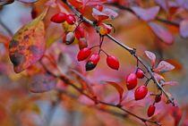 Herbst2014-134