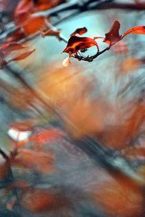 'Herbstfantasie... 1' von loewenherz-artwork