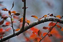 Herbst2014-126