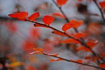 Herbst2014-125