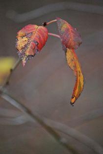 Herbst2014-157