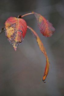 Herbst2014-156