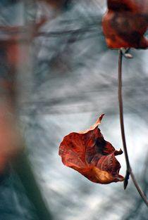 Herbst2014-144