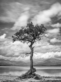 Milarrochy-tree-bearbeitet-30x40-frankstettler