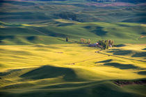 Rolling Fields by Wolfgang Kaehler