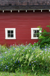 Flowers in front of red barn von Wolfgang Kaehler