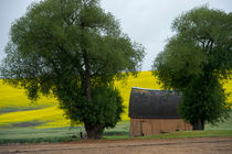 Barn and Trees by Wolfgang Kaehler
