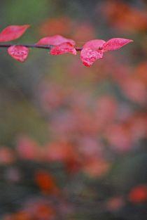 Herbst2014-174