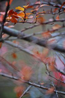 Herbst2014-172