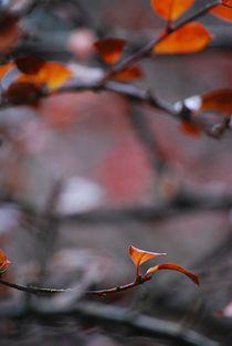 Herbst2014-167