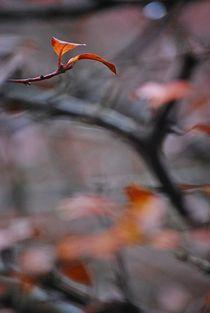 Herbst2014-166
