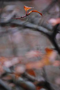 Herbst2014-165