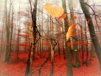 'nebelmorgen' by hedy beith