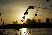 Rhein-nov-2014-001b