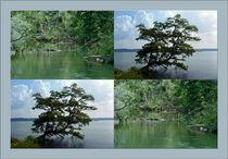 """Viererbild """"Vegetation am Wasser"""" von lisa-glueck"""