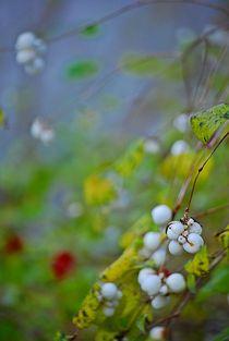 Herbst2014-183