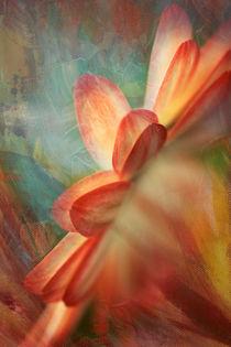 Dahlia abstrakta von © Ivonne Wentzler