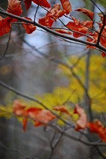 Herbst2014-207
