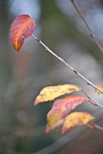 Herbst2014-196