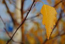 Herbst2014-231