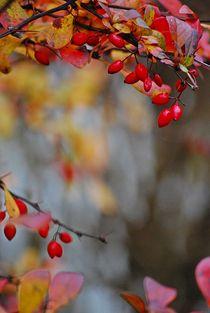 Herbst2014-225
