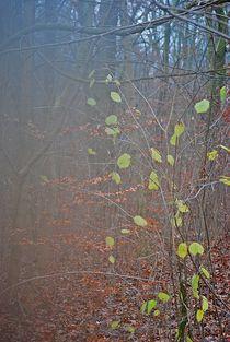 Herbst2014-257