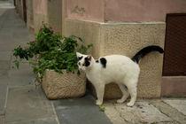 Cat I  by Rob Hawkins
