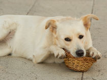 Dog Basket  by Rob Hawkins