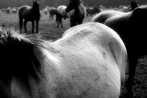 Ein schöner Rücken... by Bastian  Kienitz