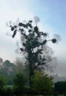 'Ascending Fog' von Juergen Seidt