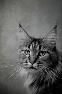 Katzenblick / 1 von Heidi Bollich