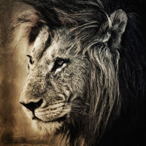 Lion II by AD DESIGN Photo + PhotoArt