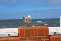 Möve - Blick zum Meer von Renate Stremme