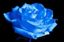 Farbwelt-993b-6000-blau