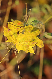 Die Farben des Herbstes von toeffelshop