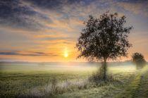morgennebel by Manfred Hartmann