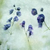 Memories of Spring von Priska  Wettstein